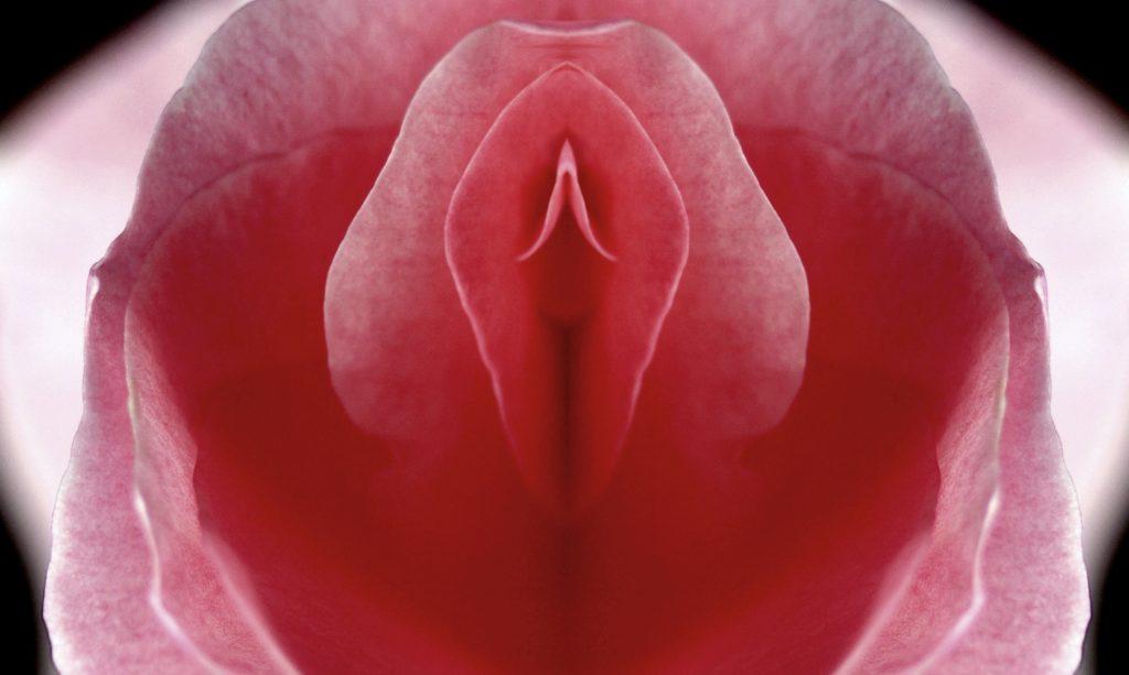 flower representing revision labiaplasty